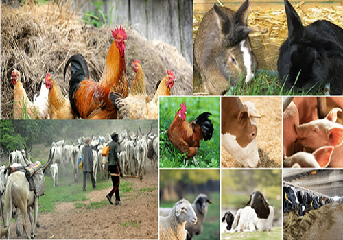 about-all-livestock
